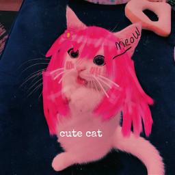 cat cute aesthetic icon instagram