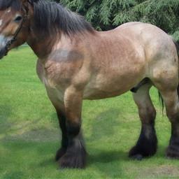 cheval equitation equestrian abonnezvous