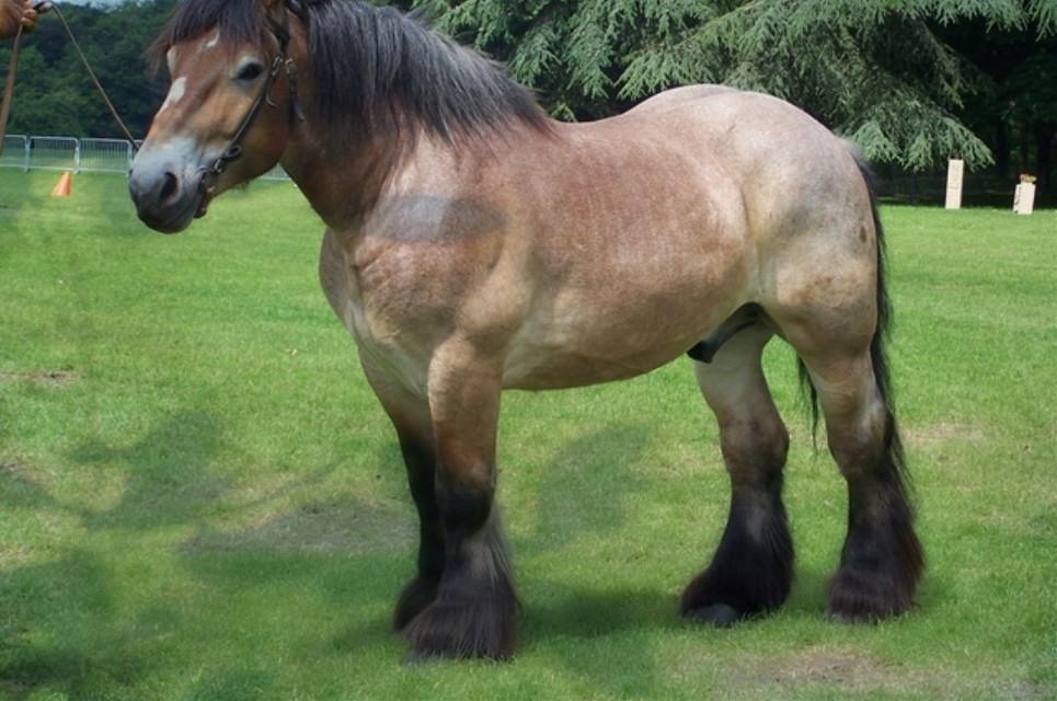 #cheval #equitation #equestrian #abonnezvous
