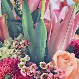 flowers floraeffect springiscoming