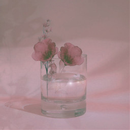 remix flowers glass cup shine pinkhues pinkflowers plants water artsy flowersincup glasscup wateringlass glassofwater flowerphotography notmypic freetoedit