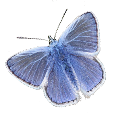 butterfly moth insect insects bugs arthropod blue blueinsect animals cuteanimals cute cutebugs freetoedit
