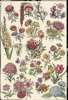 flowers flowerchart cottagecore plants aesthetic aestheticflowers freetoedit