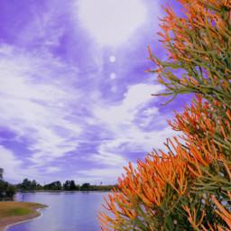 nature orange desert oasis water