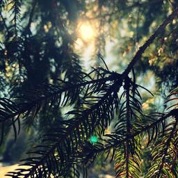 naturephotography photography sunshine