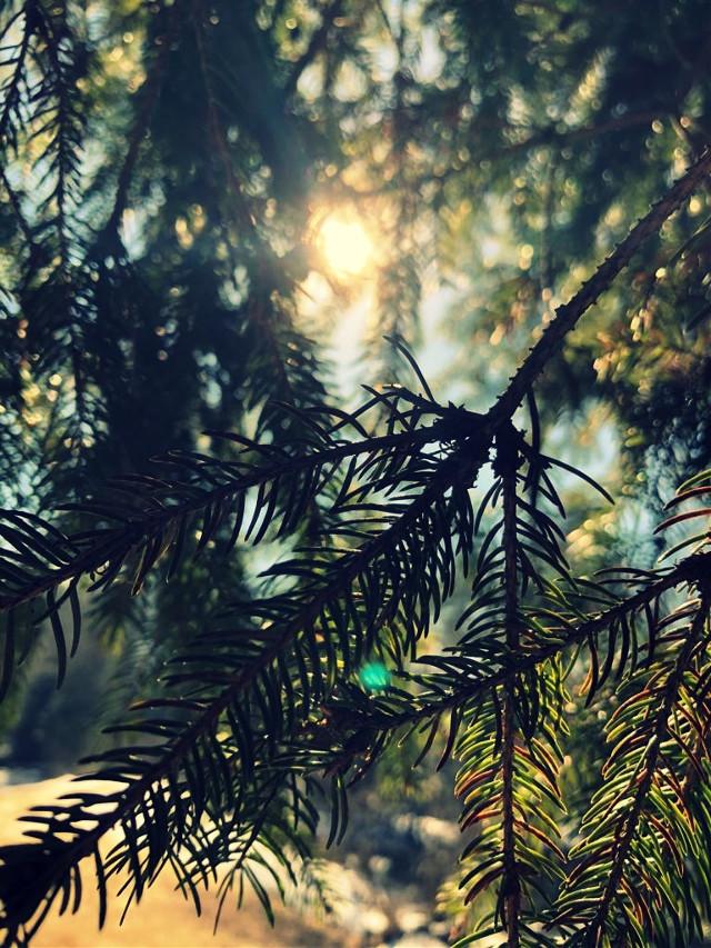 #naturephotography #photography #sunshine  @annanas012 @lina47653 @sunflower_2312 @julia_marie02 @nele_bujo @xxelena156 @itz___laura @wandavision_123