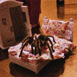 cutespider spider aesthetic vhs freetoedit