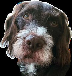 dog cuteface freetoedit