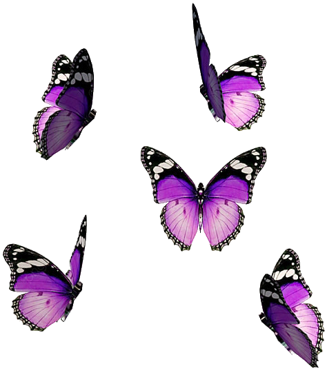 #butterfly #butterflies #purple #pink #fly #flying #shine #wings #stickers #light #aesthetic #butterflywings #new #nature #insect #beautiful #cute #sparkle #overlay #galaxy #emoji #lovers #frame #heart #replay