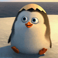 baby penguin cute hatched