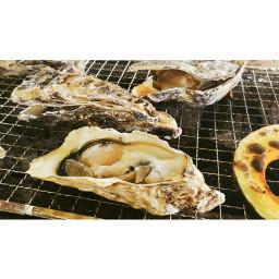 牡蠣 oister