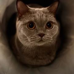 matilda_the_cat