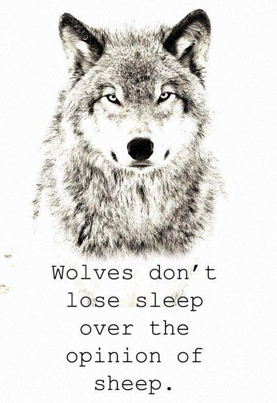 Wolves don't lose sheep over the opinion of sheep 🐺👍  This means that wolves don't waste time thinking about what the sheep think of them.   Oh yeah also I'm in West Virginia on a trip and it's cool here (there are so many hills and pine trees YEAHHHH)   Welcome to the wolf pack!  ☾ ☾ ☾ ☾ ☾ ☾ ☾ ☾ ☾ ☾ ☾ ☾ ☾ ☾ ☾ ☾ ☾ ☾ ☾  🐺🐺🐺🐺🐺🐺🐺🐺🐺🐺🐺🐺🐺🐺🐺                                         🌑🌒🌓🌔🌕🌖🌗🌘🌑  My name: Wolfy  About me: I'm a wolf therian, and I love wolves  Theriotype: Grey Wolf 🐺 Pronouns: She/her Favorite colors: Blue and light grey Favorite animal: The Wolf ❤️   Wolf of the day: @im_a_marshmallow   Meet the wolf pack: 🐺 @slothlover1123 🦥 🐺 @im_a_marshmallow 🦋 🐺 @lxvlyy 🦖 🐺 @derpy_pan_child 🐺 @midnightwolfavantisf 🐺 🐺 @goldenluvv  🐺 @_paradigm_ 🍓 🐺 @0nuggetforever0 🐺 @p_i_c_s__a_r_t_  🐺 @mxshroom-  🐺 @phibs11  🐺 @fussy_frances 🐺 @endo_the_raptor 🐺 @alxxsxul 🐺 @foxoryx_official 🐺 @disnxy77  🐺 @deer_2021 🦌 🐺 @ameliaandkate 🐺 @xfluffywolfiex 🐺 🐺 @sam_alpaca 🦙   🐺 @sweetpotatounicorn5 🥔 🐺 @gecko-lover123 🐺 @therian4life 🐺 @kendycatz-yellow 🐺 @piggythebrave  Please love and help the wolves!  ❤️🐺❤️  Hashtags: #cool #wolf #wolfquotes #bravewolf #yeah #awesome