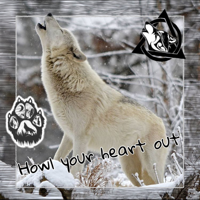 Howl your heart out!! 🐺♥️   Welcome to the wolf pack!  ☾ ☾ ☾ ☾ ☾ ☾ ☾ ☾ ☾ ☾ ☾ ☾ ☾ ☾ ☾ ☾ ☾ ☾ ☾  🐺🐺🐺🐺🐺🐺🐺🐺🐺🐺🐺🐺🐺🐺🐺                                         🌑🌒🌓🌔🌕🌖🌗🌘🌑  My name: Wolfy  About me: I'm a wolf therian, and I love wolves  Theriotype: Grey Wolf 🐺 Pronouns: She/her Favorite colors: Blue and light grey Favorite animal: The Wolf ❤️   Wolf of the day: @madswimmer16   Meet the wolf pack: 🐺 @slothlover1123 🦥 🐺 @im_a_marshmallow 🦋 🐺 @lxvlyy 🦖 🐺 @derpy_pan_child 🐺 @midnightwolfavantisf 🐺 🐺 @goldenluvv  🐺 @_paradigm_ 🍓 🐺 @0nuggetforever0 🐺 @p_i_c_s__a_r_t_  🐺 @mxshroom-  🐺 @phibs11  🐺 @fussy_frances 🐺 @endo_the_raptor 🐺 @alxxsxul 🐺 @foxoryx_official 🐺 @disnxy77  🐺 @deer_2021 🦌 🐺 @ameliaandkate 🐺 @xfluffywolfiex 🐺 🐺 @sam_alpaca 🦙   🐺 @sweetpotatounicorn5 🥔 🐺 @gecko-lover123 🐺 @therian4life 🐺 @kendycatz-yellow 🌝 🐺 @piggythebrave  Please love and help the wolves!  ❤️🐺❤️  Hashtags: #howl #wolfhowl #awooo #howllikeawolf #howllikethewolfthatyouare #wolf #howlyourheartout #wolfhowling #therian #wolftherian #proudwolf
