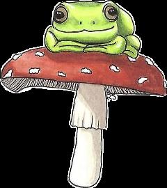 frog cutefrog animal cottagecore cottagecoreaesthetic frogonamushroom mushroom mushroomaesthetic mushroomfrog freetoedit