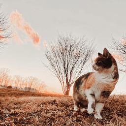 picsart viral cats animals cute trendy f4f l4l smile staysafe daisysquad ridaphotography