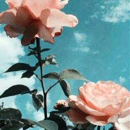 flowersaroundme