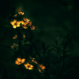 myphotography nature flowers flower photography background moody dark freetoedit
