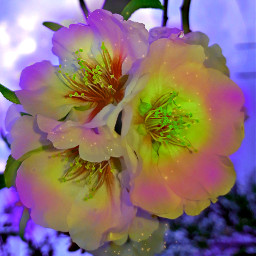 freetoedit flowersremix almonds flowersfollower