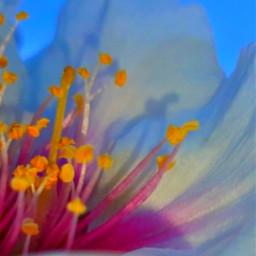 freetoedit flowerlovers sunrisephotography