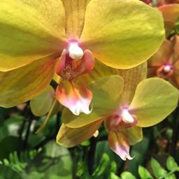 pcflowersaroundme flowersaroundme