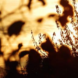 myphotography nature flowers sunset trees sun background freetoedit
