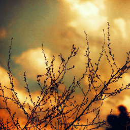 myphotography nature flowers sunset sun background sky clouds trees freetoedit