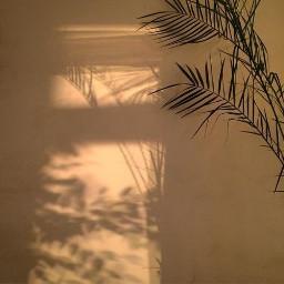 arkaplan duvarkağıdı wallpaper background goldenhour altınsaat leaf yaprak freetoedit