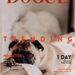 magazinecover dog pet meme freetoedit