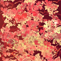 flower background aesthetic red redaestethic bloom flowers nature freetoedit