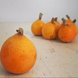 fruit medlar pcfavoritefruitsandveggies favoritefruitsandveggies