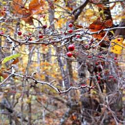 nature naturephotography frutta redvelvet magical pcfavoritefruitsandveggies daylight scenery