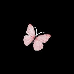 sticker butterfly butterflies butterflysticker overlay freetoedit