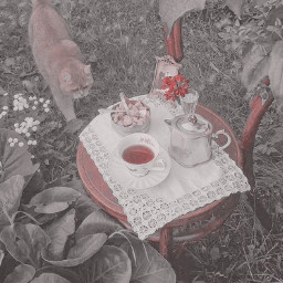 s0fts freetoedit aestheticpic aestheticpicture aestheticstuff gachaeditor aestheticart aestheticpink pinkaesthetic peachyaesthetic softaesthetic softieaesthetic angelcore cottagecore fairycore softcore aestheticcat teaparty
