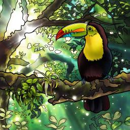 toucan bird rainforest jungle