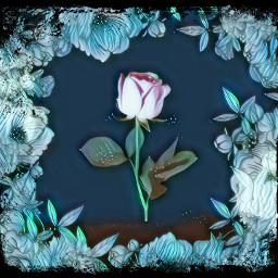 rose black blue ice roses flower flowers freetoedit