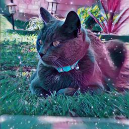 catlifestyle