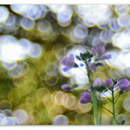 flower spring nikonphotography nikond5300 bokehphotography