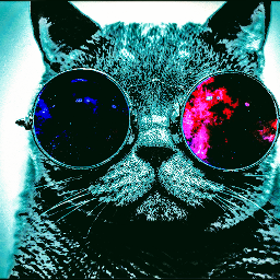 cat glasses blue catwithglasses