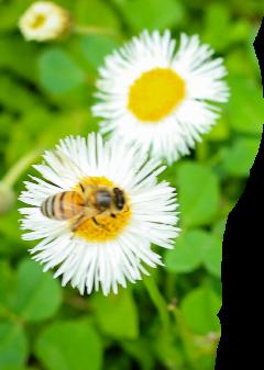 freetoedit flor heypicsart mydesign editedbyme