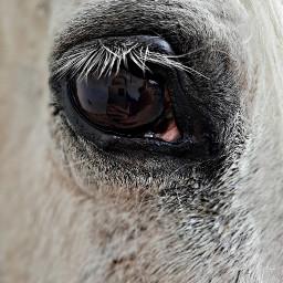 happybirthday horse halagado