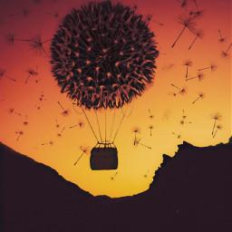 hotairballoon dandelion sunset silhouette srcfloatingdandelions floatingdandelions freetoedit