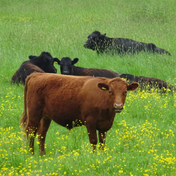 photography farm bovine meadow nature travel stratton cotswolds uk rtfartee myphoto noeditneeded