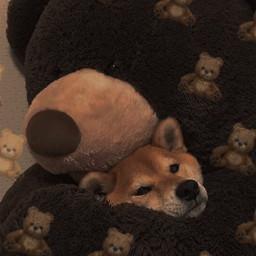bye my little pups freetoedit
