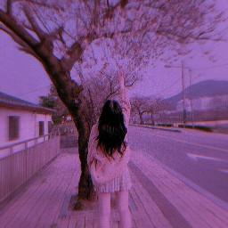 cherry purple purpleaesthetic purpleedit cherryblossom aesthetic aestheticpurple aestheticreplay replay free edit aestheticedit kpop korean korea koreangirl sakura happymothersday mothersday special 90s 20s ⋇⋆✦⋆⋇ freetoedit 20s