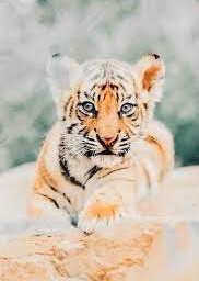 cute peachaesthetic tiger