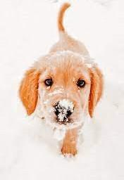 snow doggy cute