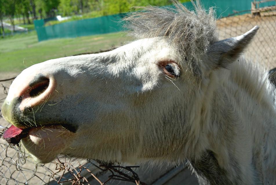 #freetoedit#horse#zoo#petsandanimals#love#feed#vegetables#photoday#travel#