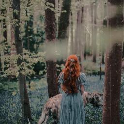 darkwoods freetoedit