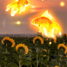 fish edit girasol atardecer sol freetoedit srcgoldenfish goldenfish
